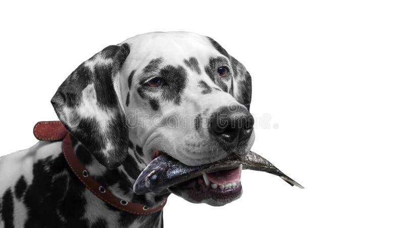 Cão da aldeia piscatória imagem de stock