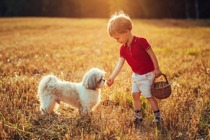 Cão da alimentação de crianças imagem de stock royalty free