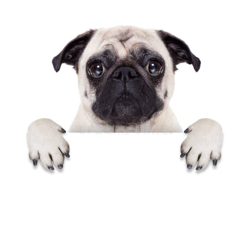 Cão da bandeira do cartaz imagem de stock royalty free