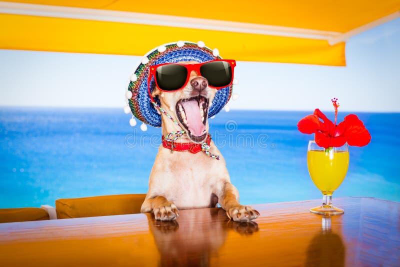 Cão da bebida do cocktail nas férias das férias de verão o clube da praia fotografia de stock