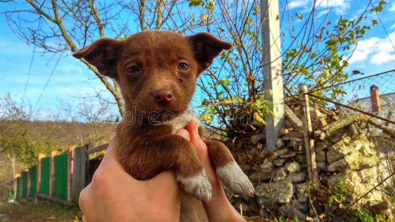 Cão da beleza fotos de stock royalty free