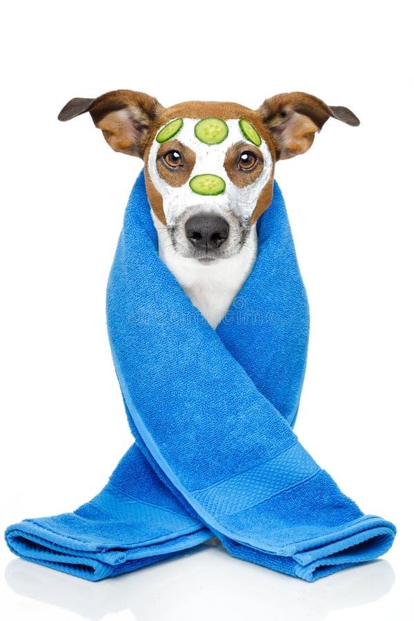 Cão da beleza imagens de stock royalty free