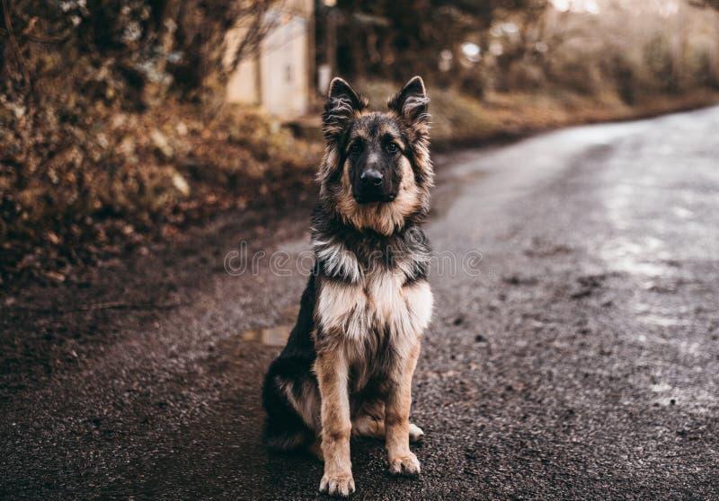 Cão da beleza do outono imagens de stock royalty free