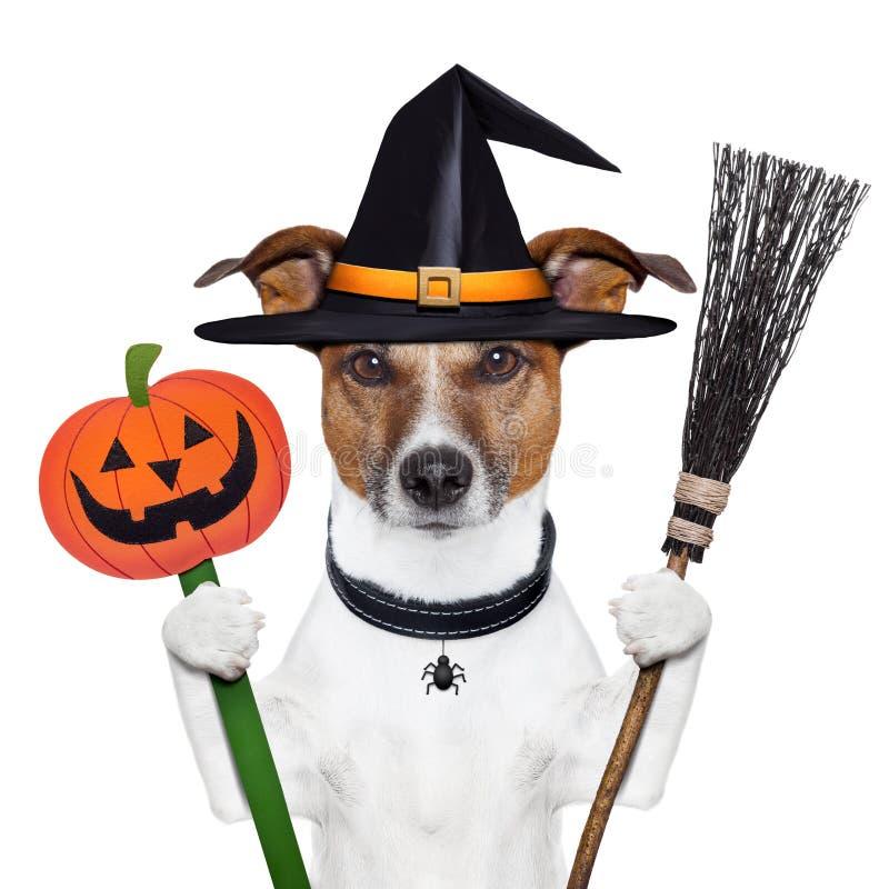 Cão da bruxa da abóbora de Halloween fotos de stock royalty free