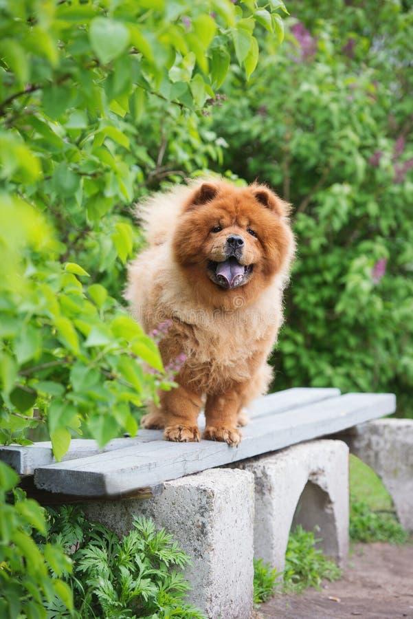 Cão da comida de comida de Brown que está em um banco fotografia de stock