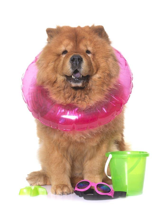 Cão da comida de comida no verão fotos de stock