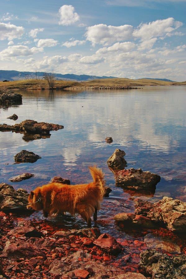 Cão da comida no lago foto de stock royalty free