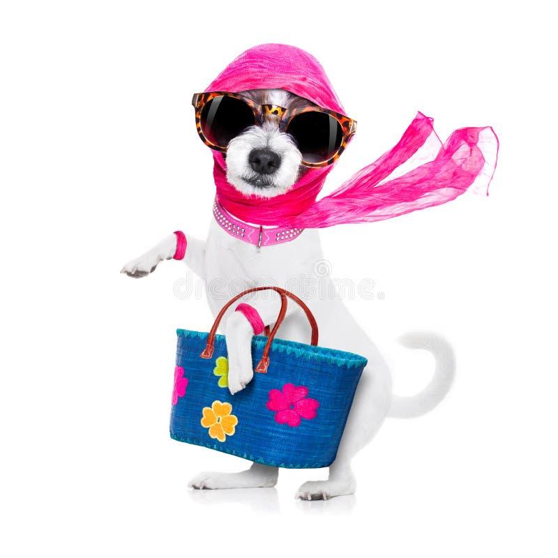 Cão da diva da compra fotografia de stock