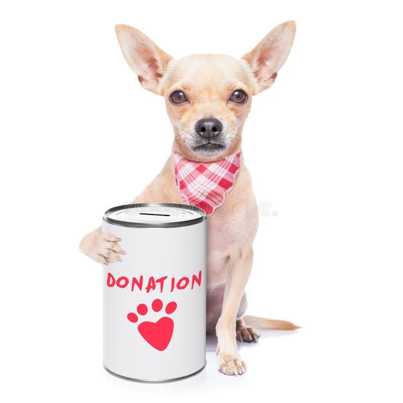 Cão da doação imagens de stock royalty free