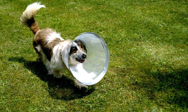 cão da hospitalidade imagens de stock