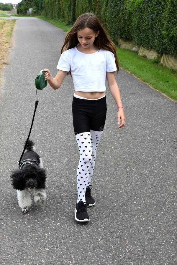 Cão da menina e de caniche imagens de stock