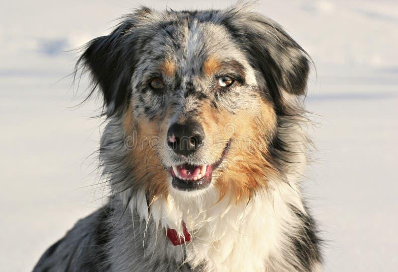 Cão da neve fotos de stock
