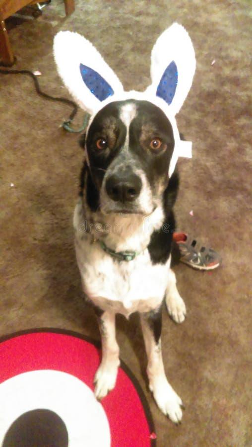 Cão da Páscoa imagem de stock royalty free