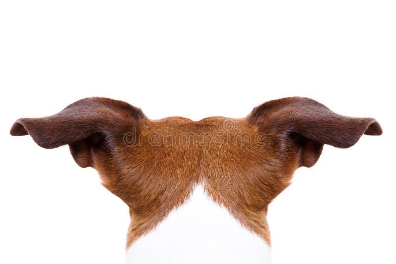 Cão da parte traseira de trás imagens de stock