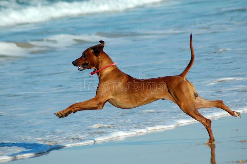 Cão da praia fotos de stock royalty free