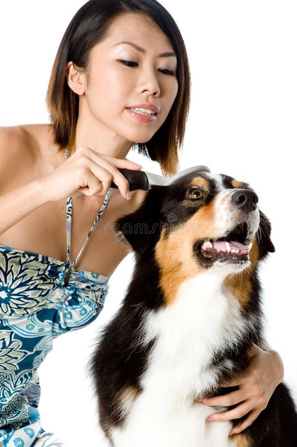 Cão da preparação fotografia de stock