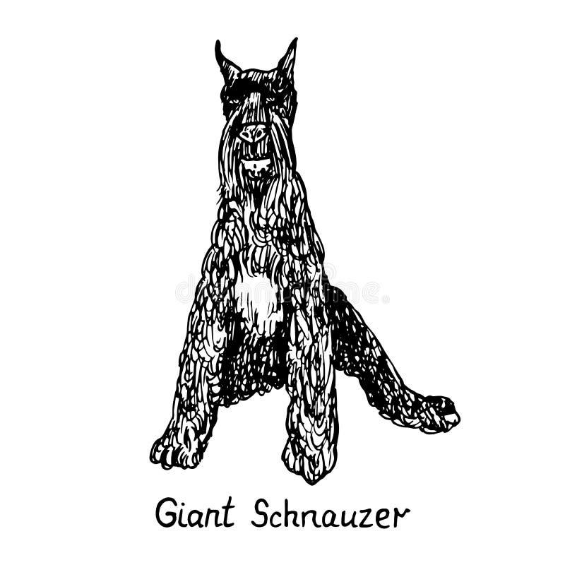 Cão da raça que senta-se, do Schnauzer gigante esboço tirado mão da garatuja com inscrição, ilustração isolada do vetor ilustração royalty free