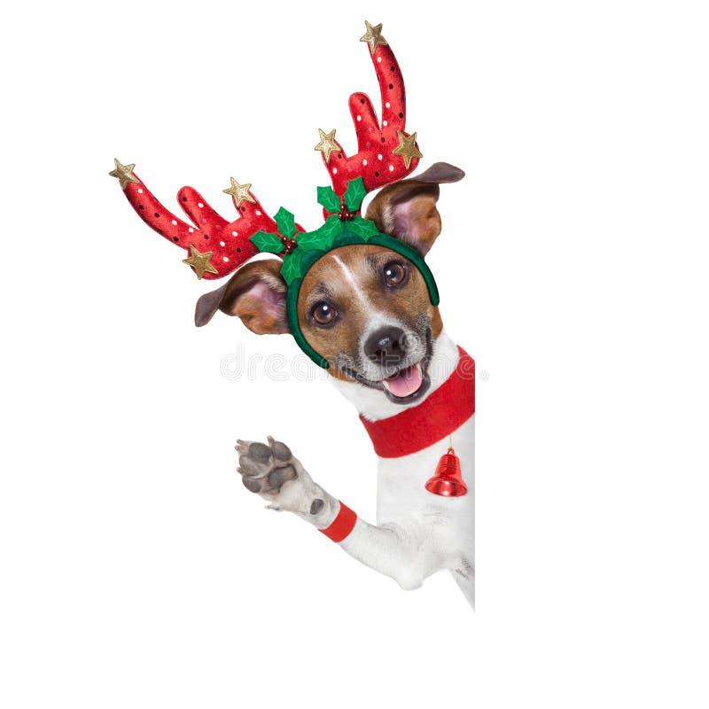 Cão da rena imagem de stock royalty free