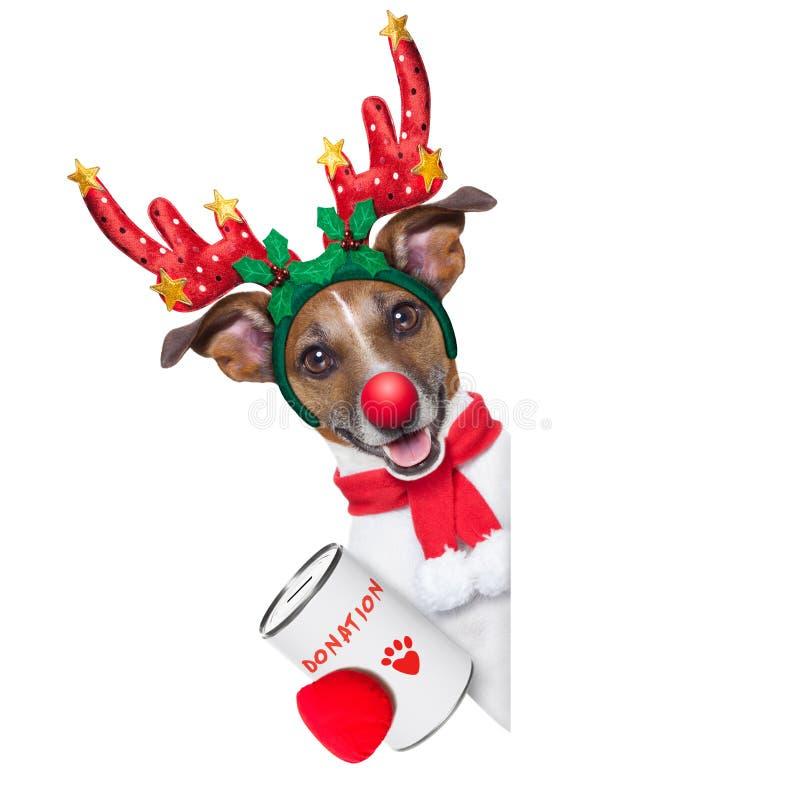 Cão da rena fotografia de stock royalty free