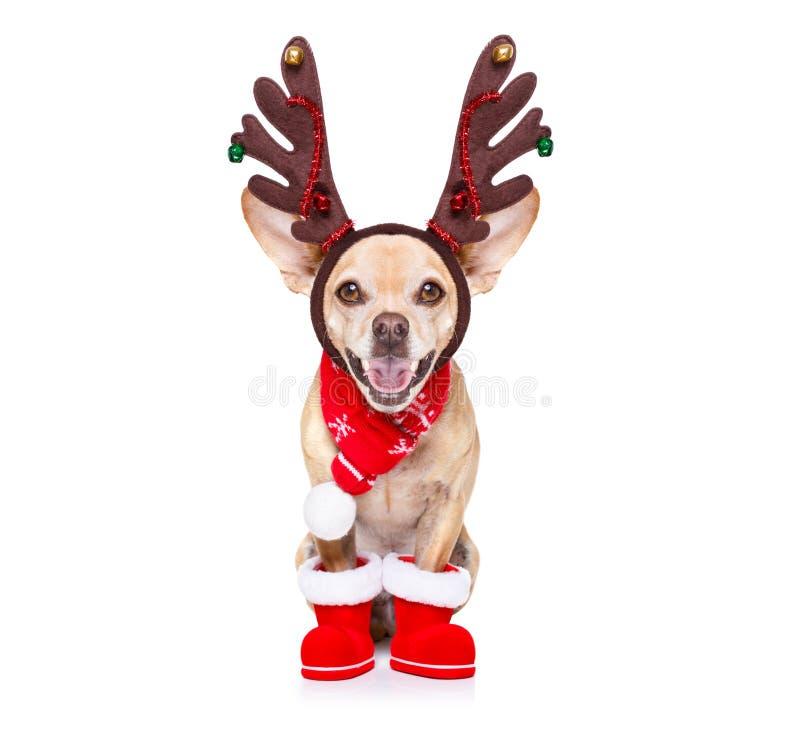 Cão da rena de Papai Noel do Natal imagens de stock royalty free