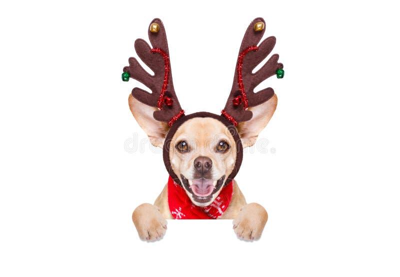 Cão da rena de Papai Noel do Natal fotografia de stock royalty free
