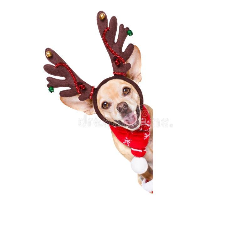 Cão da rena de Papai Noel do Natal foto de stock royalty free
