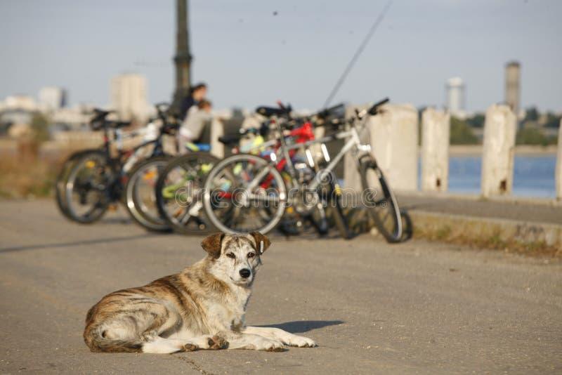 Cão da rua foto de stock royalty free
