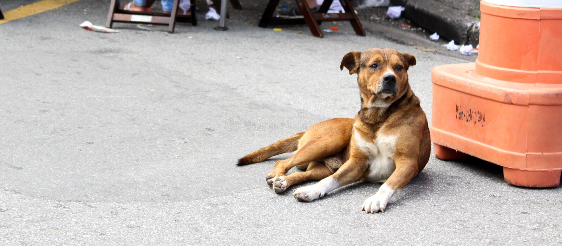 Cão da rua de Brown fotos de stock royalty free