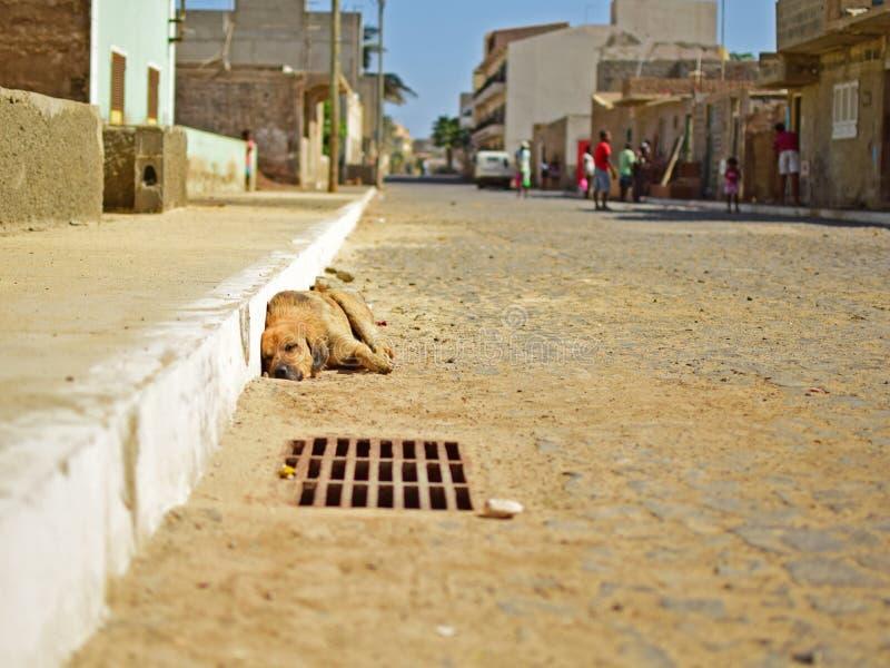 Cão da rua de Cabo Verde imagem de stock royalty free