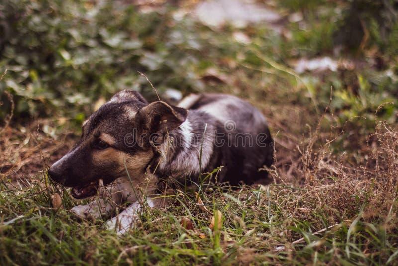 Cão da rua na floresta fotos de stock royalty free