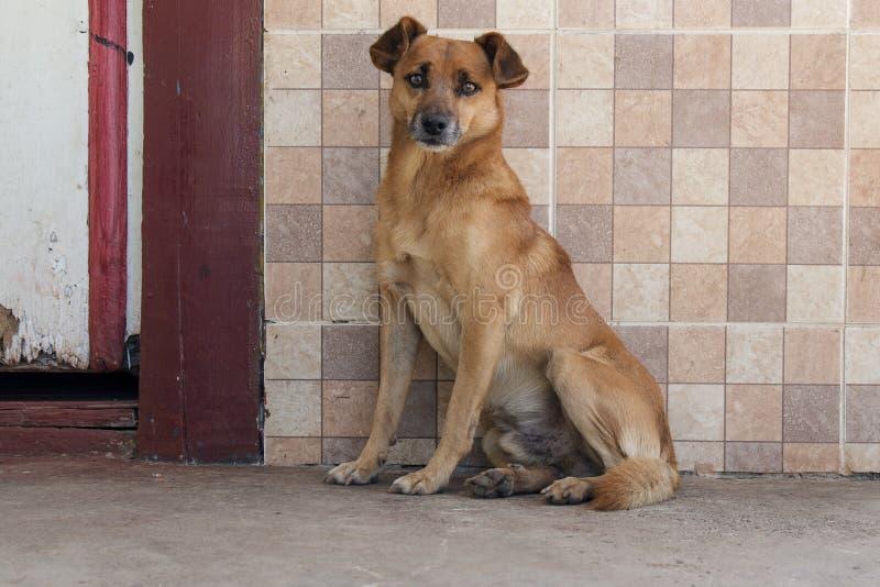 Cão da vila imagens de stock royalty free