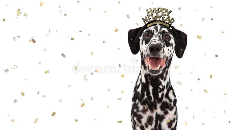 Cão Dalmatian da celebração do ano novo feliz imagens de stock