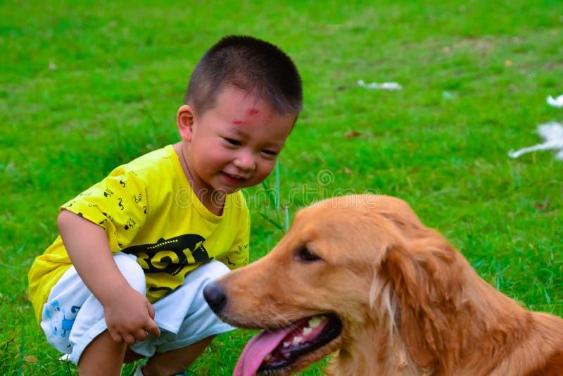 Cão das crianças e do golden retriever fotos de stock royalty free