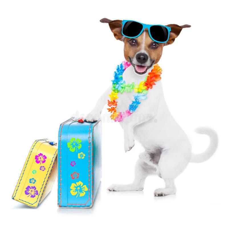 Cão das férias de verão foto de stock
