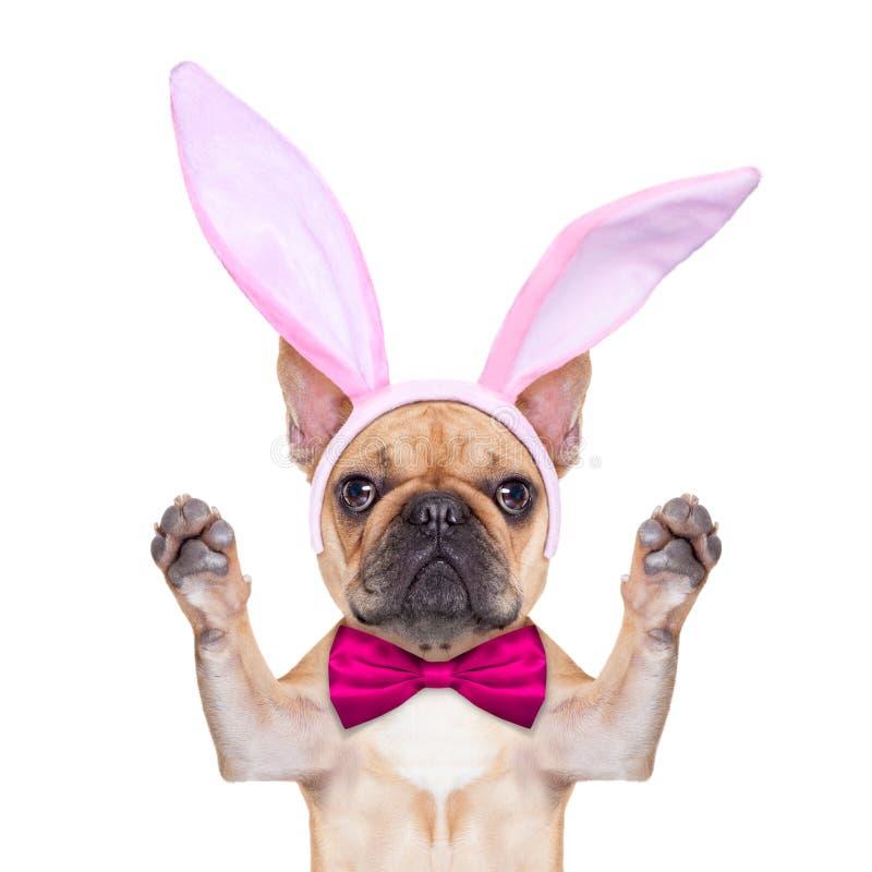 Cão das orelhas de easter do coelho foto de stock