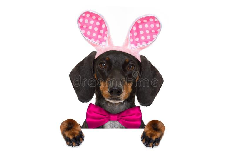 Cão das orelhas de easter do coelho foto de stock royalty free