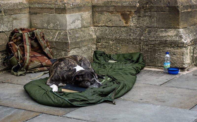 Cão das pessoas desabrigadas que dorme no saco-cama golpeado imagem de stock royalty free