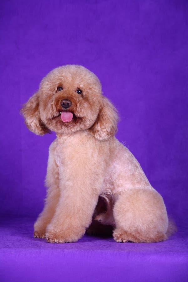 Cão de animal de estimação fotos de stock royalty free