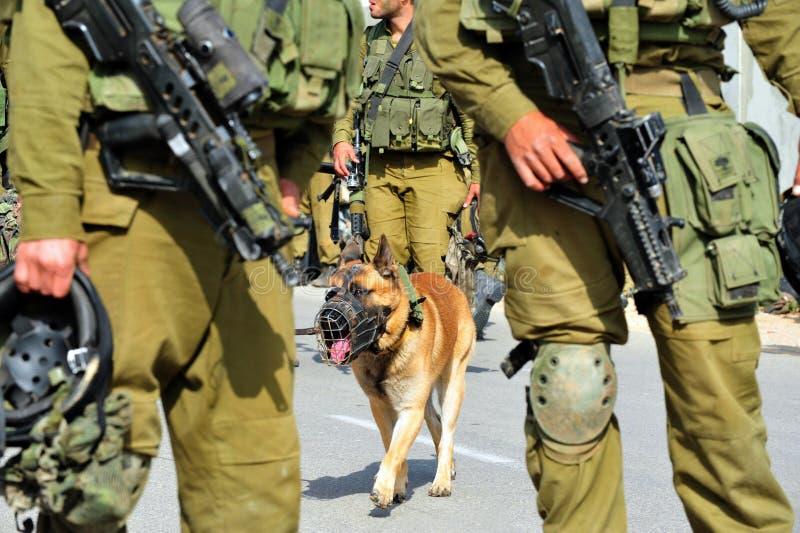 Cão de ataque do exército israelita foto de stock