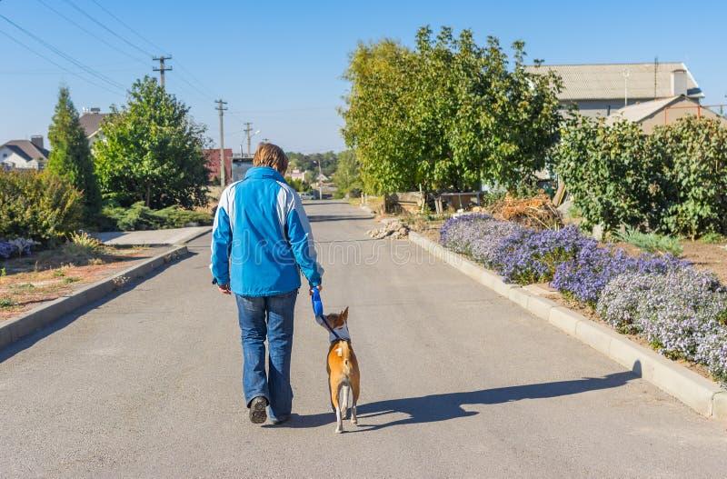 Cão de Basenji com mestre que acorda em uma rua foto de stock royalty free