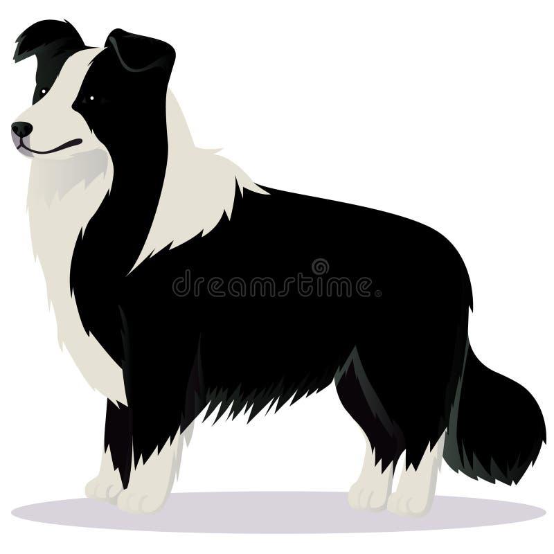 Cão de border collie preto e branco ilustração stock