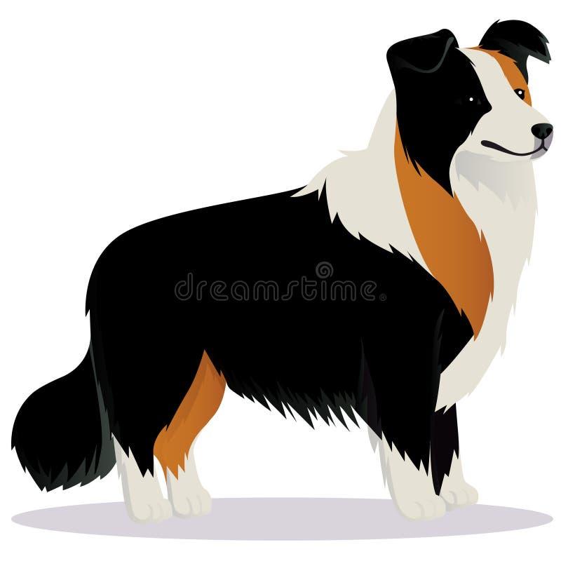 Cão de border collie tricolor ilustração royalty free