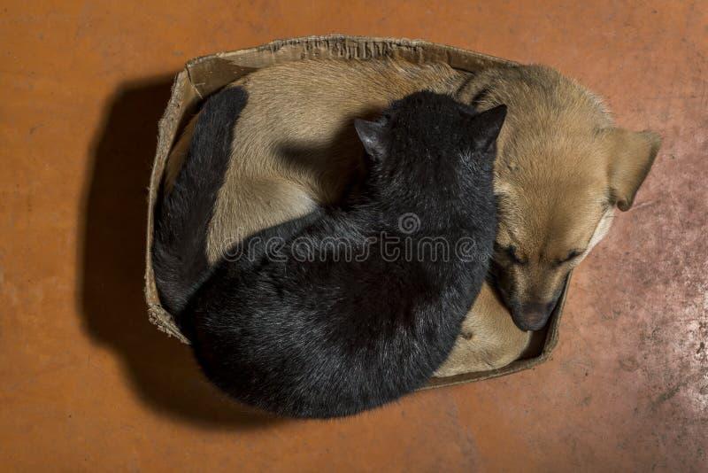 Cão de Brown e gato preto fotografia de stock royalty free