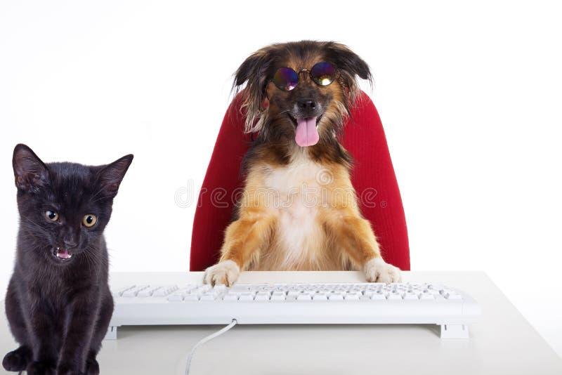 Cão de Brown e gato preto como um cozinheiro chefe fotografia de stock royalty free