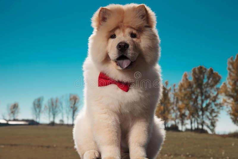 Cão de cachorrinho bonito da comida de comida que senta-se e que arfa imagens de stock royalty free