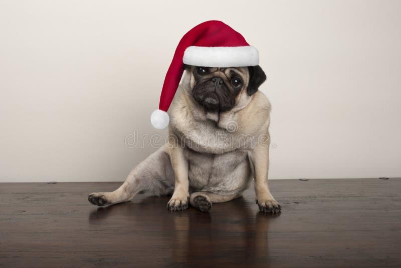 Cão de cachorrinho bonito do pug do Natal que veste o chapéu de Papai Noel, sentando-se para baixo no assoalho de madeira rústico imagem de stock royalty free
