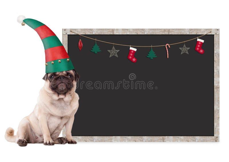 Cão de cachorrinho bonito do pug que veste um chapéu do duende, sentando-se ao lado do sinal vazio do quadro-negro com decoração  fotos de stock