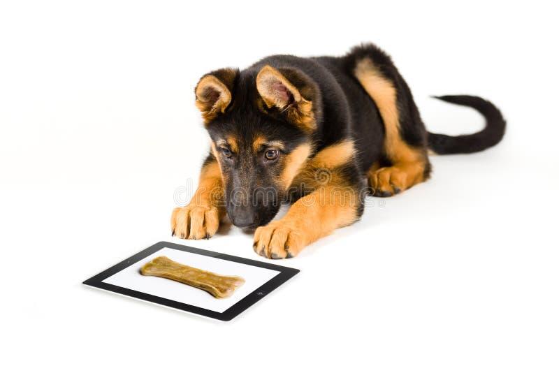 Cão de cachorrinho bonito que olha o osso em um tablet pc foto de stock