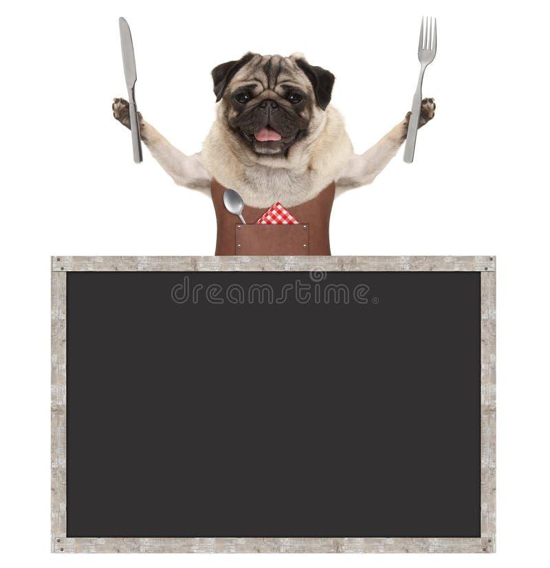 Cão de cachorrinho de sorriso doce do pug que guarda a cutelaria para comer a refeição e vestir o avental de couro, com sinal vaz imagens de stock
