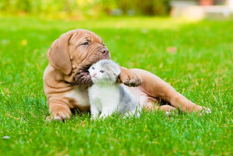 Cão de cachorrinho do Bordéus que joga com o gatinho na grama verde fotos de stock royalty free